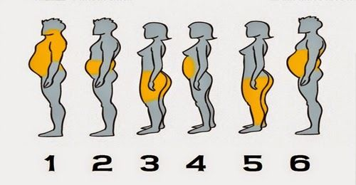 Body Fat Distribution Differs From Person To Person And As We See In This Diagram  And Fat