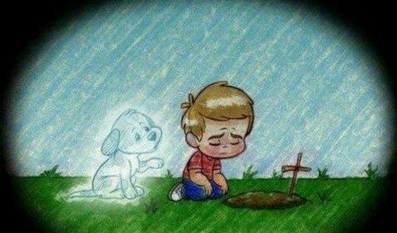 El amor a las mascotas....