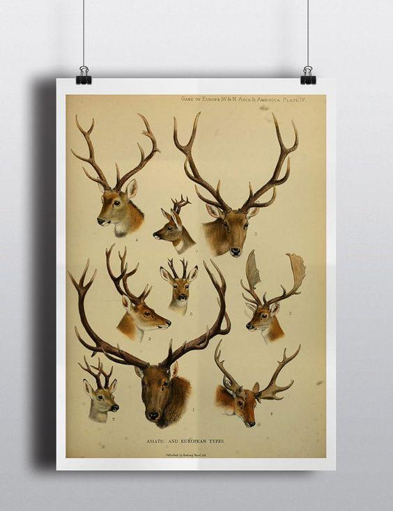 Elk Antler Wall Art - illustrations — black deer head elk reindeer ...