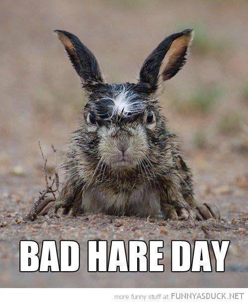 velveteen rabbit. :)