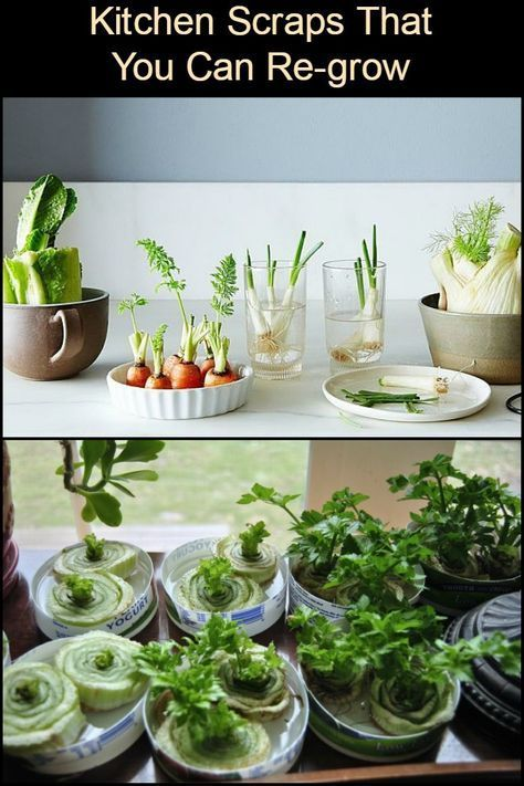 Foods You Can Re Grow Yourself From Kitchen Scraps Which Of These Would You Like To Re Grow Indoor Vegetable Gardening Home Vegetable Garden Regrow Vegetables