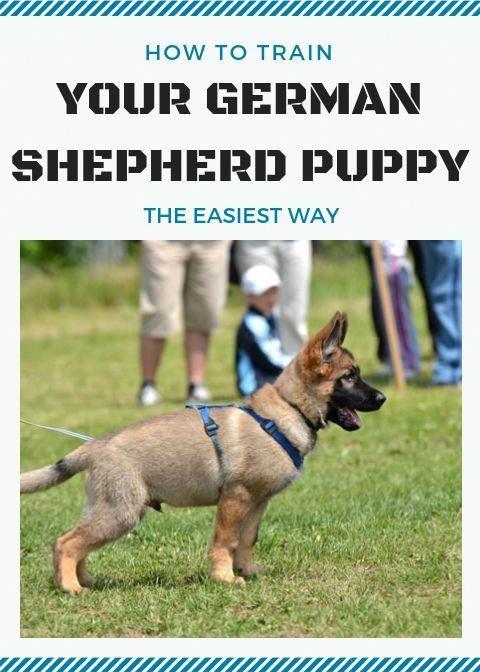 Triumphant Best Dog Training Tricks Helpful Resources German