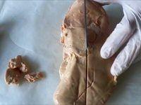 Vidéo - Déveiner un foie gras frais