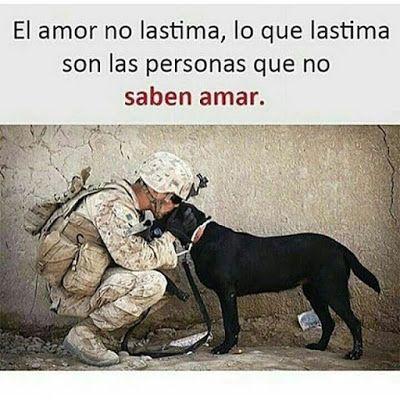 El Poder Del Amor Animales Frases Frases Militares Frases Motivacionales