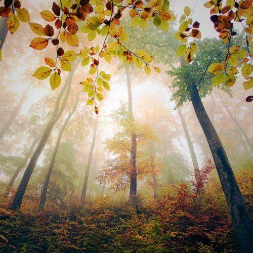 gorgeous autumn color