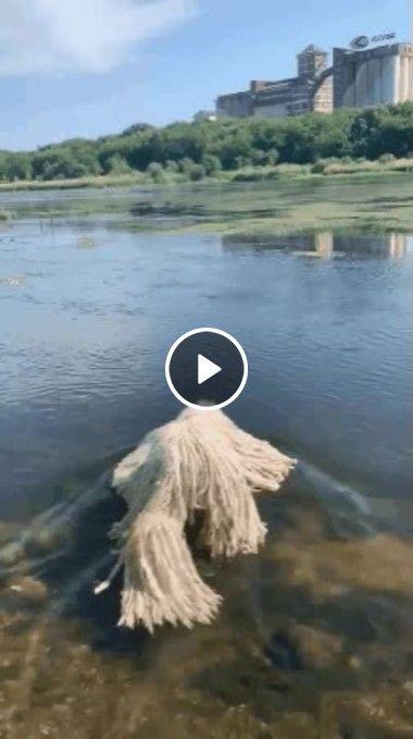 Jogaram um bicho peludo na água