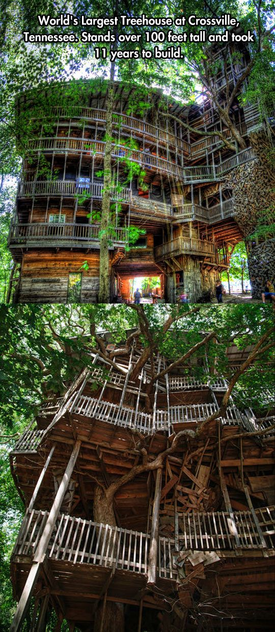 the worlds tallest treehouse tree houses house and nashville - Biggest Treehouse In The World 2014