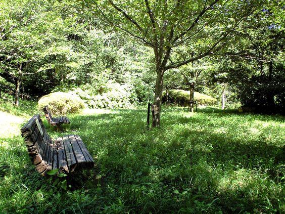 Natural garden, bench