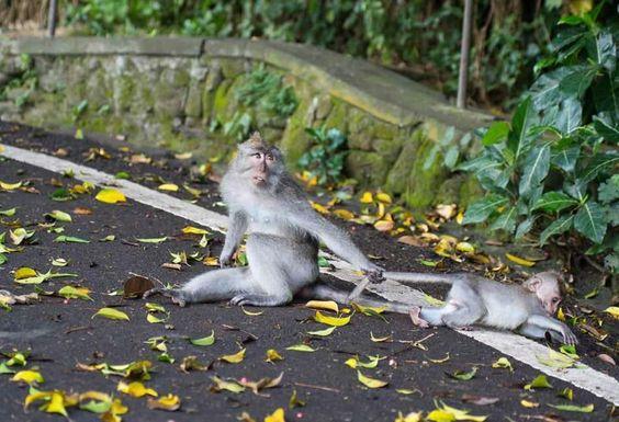 Crazy monkeys...