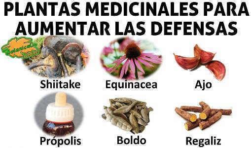 Remedios Naturales Plantas Para Aumentar Las Defensas Remedios Remedios Naturales Vitaminas Y Minerales