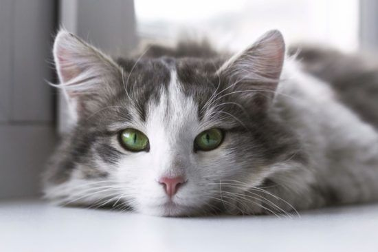 What Does It Mean If Your Cat S Eyes Change Color Sick Cat Kittens Cutest Cats