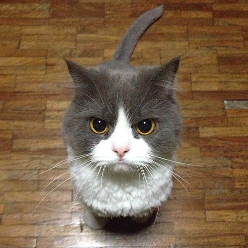 Image result for CUTE cats ANGRY
