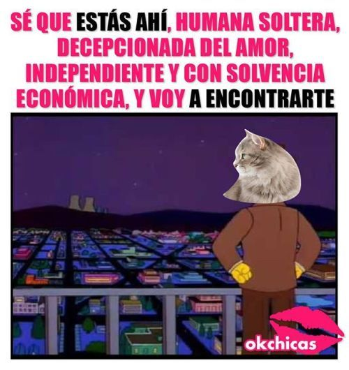 Imagenes Y Frases Chistosas Http Crearpostales Com Imagenes Y Frases Chistosas 249 Html Vwhatsapp Risa Funny Memes Memes Funny Pictures
