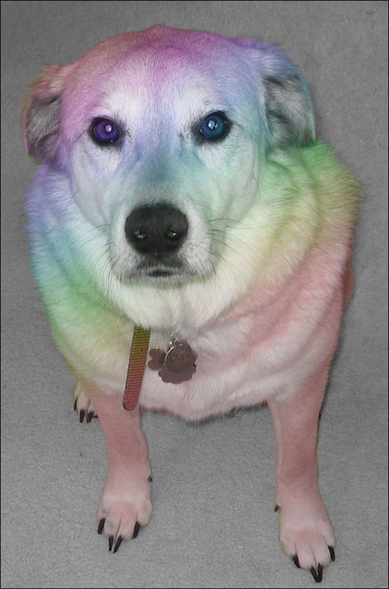 RAINBOW DOG - Has your love life gone to the dogs?... You can change things. - Amazing Singles has got the lowdown on Local Singles Events, Dances and Activities in your area. ... plus information on just about anything else there is to do with being Single. - Amazing Singles is the Hottest Singles Resource on the Web… visit www.amazingsingles.com