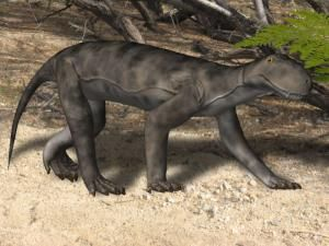 Pictures and profiles of over three dozen therapsids, the mammal-like reptiles that preceded the dinosaurs, ranging from Anteosaurus to Ulemosaurus.: Meet the Mammal-Like Reptiles of the Paleozoic Era
