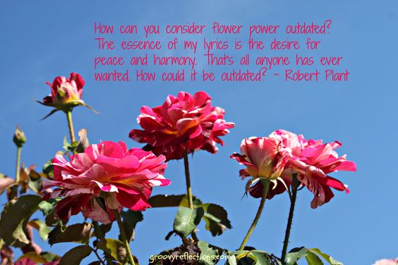 Robert Plant of Led Zepplin fame quotes on flower power peace and harmony. We pair his words with Southern California roses.