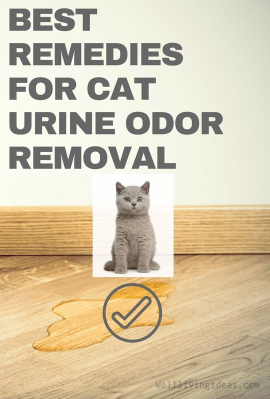 11 Effective Home Remedies For Cat Urine Odor Removal Pets Catsprayingproducts Cat Urine Odor Remover Urinal