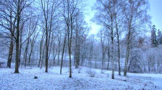 Un año en 40 segundos  Este vídeo de Eirik Solheim nos muestra en 40 segundos como cambia la naturaleza a lo largo de un año.   El sonido del vídeo también fue captado en un único punto.