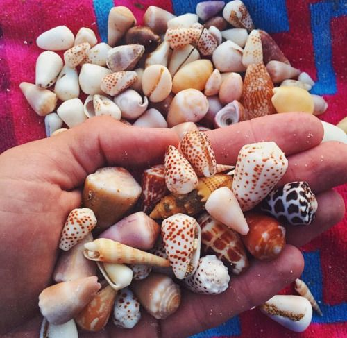 Sally Sells Sea Shells by the Sea Shore #SummerWithBollare