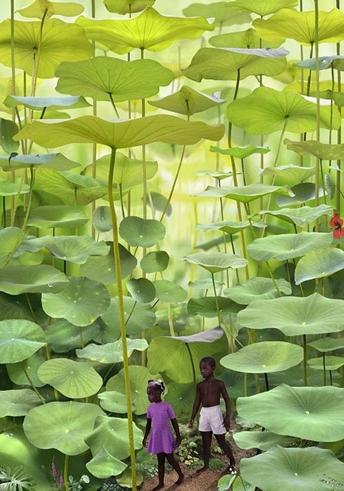 Fern Forest, Jamaica