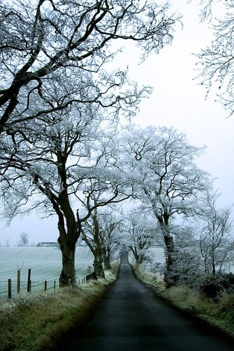 Bohemian Wornest, Winter road, curve, fence, mysterious, mist, misty, trees, snowf, beauty of Nature, on the road