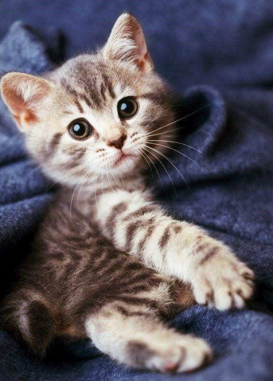 Gatos lindos (2)
