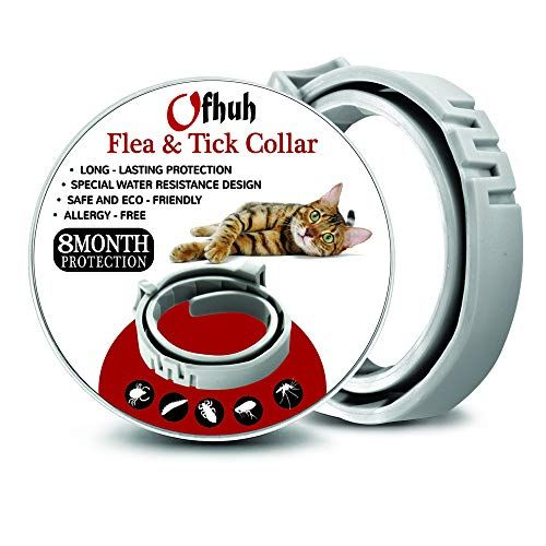 Ofhuh Flea Collar For Cats One Size Fits All Flea And Tick Prevention Up To 8 Months Waterproof Collar Safe Eco Friendly Hypoallergenic Wi Flea And Tick Tick Prevention Cat Fleas