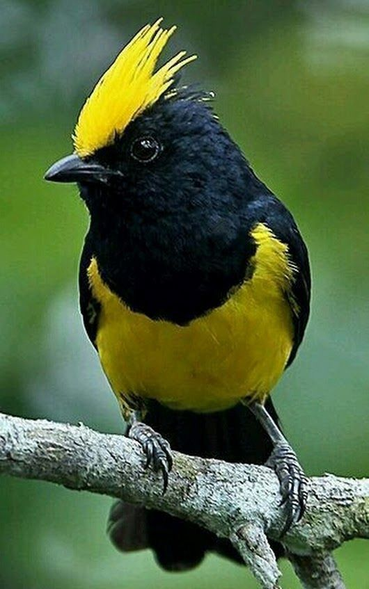 Pin On Just Birds