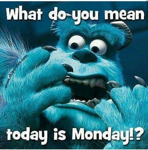 Pin By Danielle Vietti On Mondays Monday Memes Monday Humor Good Morning Funny