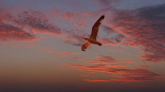 Red seagull by Dragan*, via Flickr