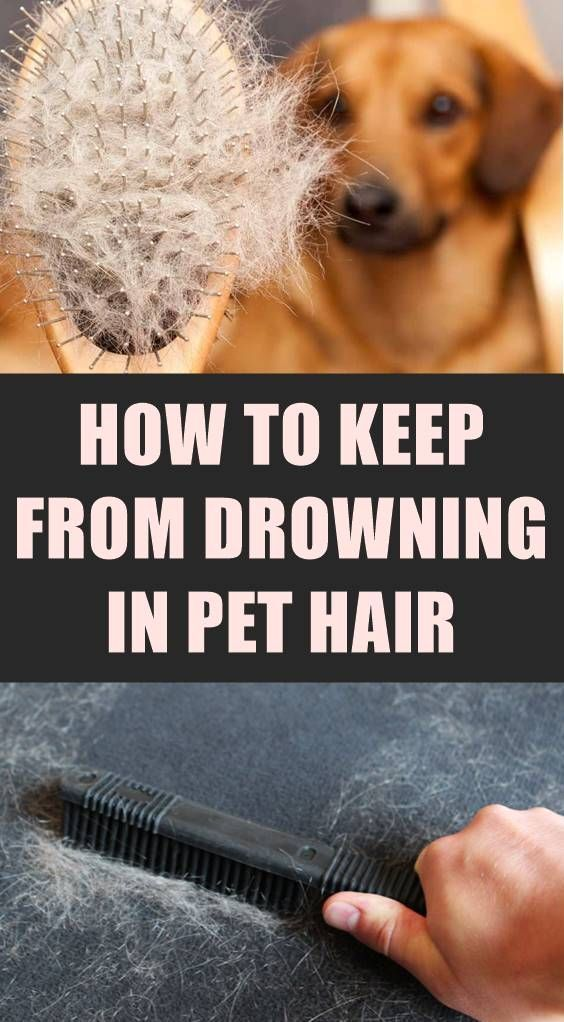 How To Get Dog Hair Out Of Clothes When Washing