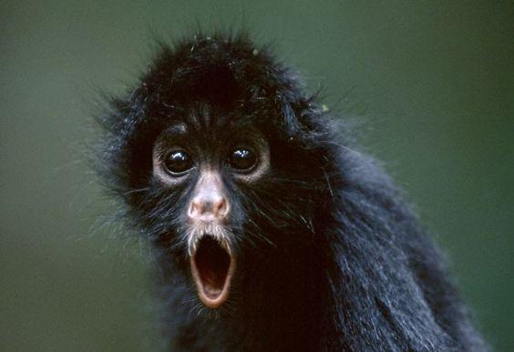 Cette sélection de 48 animaux choqués par ce qu'ils viennent de voir est à mourir de rire !