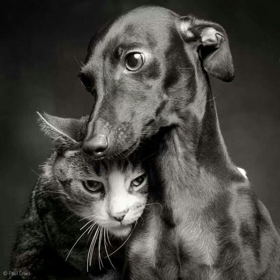 Friends. Fotografía de Paul Croes:
