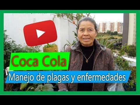 Coca Cola Para El Cabello Para Que Sirve Pin En Consejos Para Plantas
