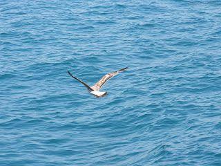 gaivota e mar