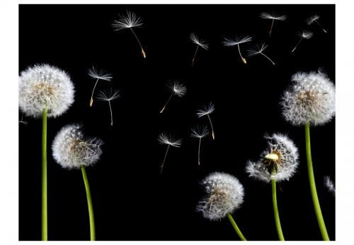 Fototapeta Dmuchawce Latawce Wiatr Dandelion Dandelion Wish Flowers