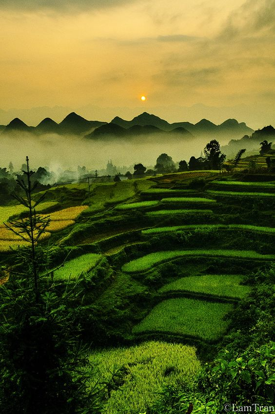 Rice Terraces,  Dong Anh, Vietnam