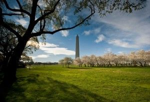 A view of the Washington Monument surrounded by blooming cherry trees. Learn more about its history and why it was closed to the public for several years.