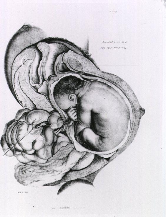 Anatomy of womb