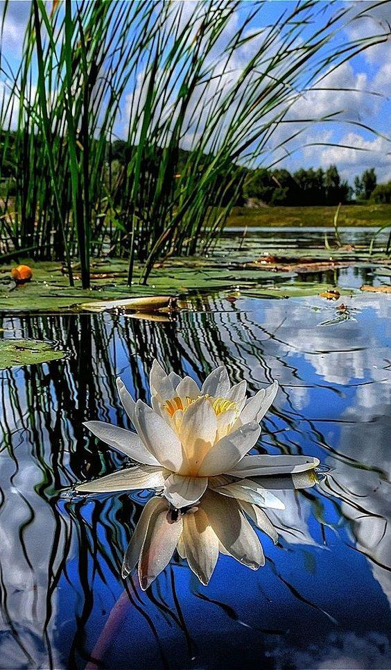 Foto Impressionen 💕 PS. - #countryside #Foto #Impressionen #PS