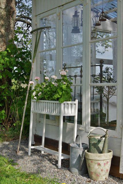Glass house and Mårbacka pelargonium
