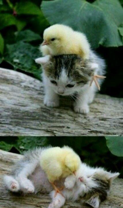 Pequeños amigos