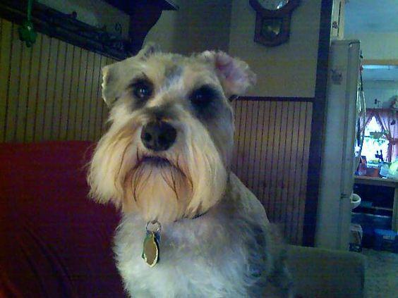 Yes, I'm cute (Brady 2008)