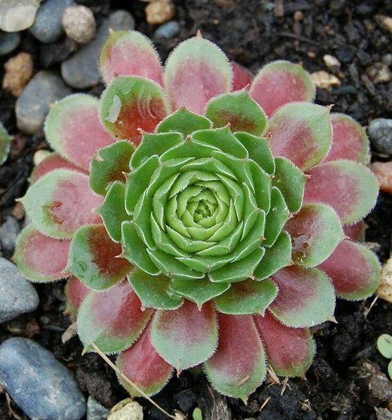 Amy AcarBra   C&S (Cactus & Suculentas) - C&S - Suculentas - Community - Google+