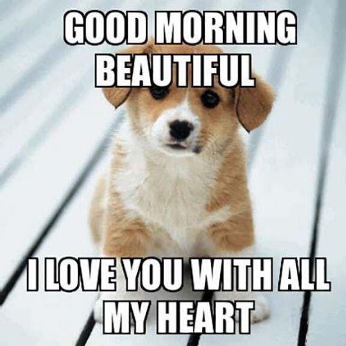 Absurd Funny Good Morning Beautiful Memes Funny Good Morning Memes Funny Morning Memes Cute Good Morning Meme