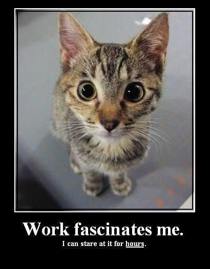 Funny Cat Meme About Work : Work fascinates me cat meme animal funnies