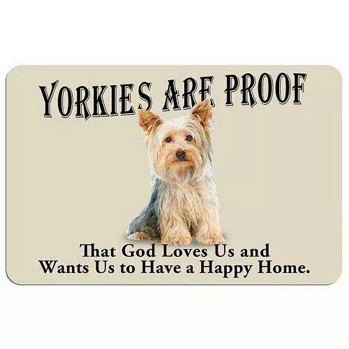 I Love Yorkies Yorkshireterrier Yorkshire Terrier Yorkie