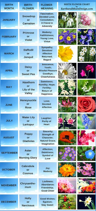 Birth Flowers for every month: https://earthandmoondesign.com/birth-flowers-aprils-daisy-and-sweet-pea/