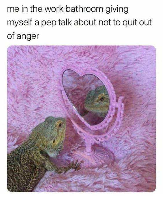 Here Are The Best Memes Of The Week Animal Memes Work Humor Work Memes