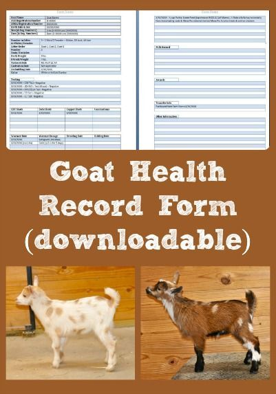 Here's a downloadable goat health record form that can be used as a template for creating goat health records for your farm (note, uses Microsoft Word).